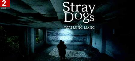 straydogssmall