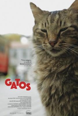 gatos1
